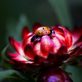 Love.. by Veeresh Pathania - Nature Up Close Flowers - 2011-2013