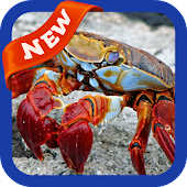 Crab Wallpaper APK for Bluestacks
