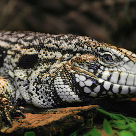 by Jeff Fox - Animals Reptiles