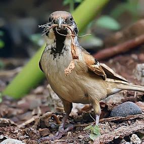 by Theofilus Saiman - Animals Birds
