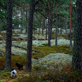 Getå, Sweden. The sacred forest by Alf Winnaess - Landscapes Forests