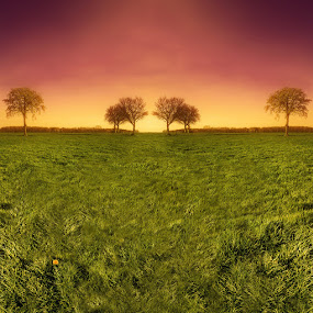 Beyond the Horizon by Raymon Brugman - Digital Art Places ( pink floyd trees grass sun surealistic sunset yellow mellow orange red green weed )