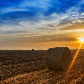 Hay Balls by Maja Tomic - Landscapes Prairies, Meadows & Fields ( field, balls, hay, sunrise,  )