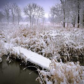 Winter Path by Jon Kinney - Landscapes Prairies, Meadows & Fields ( winter, snow, bridge )