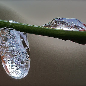 frozen... by David Van der Smissen - Abstract Water Drops & Splashes ( water, drop, art, frozen, tears )