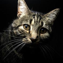 Neo by Brett Skolmen - Animals - Cats Portraits