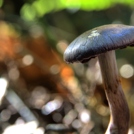 by Dave Martin - Nature Up Close Mushrooms & Fungi