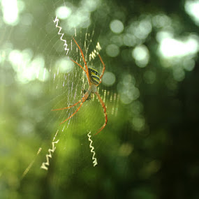 by Kiran Krishna - Nature Up Close Webs