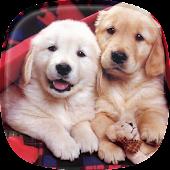 Welpen Hintergrundbilder 🐶 Süßer Hunde