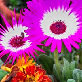 by Deep Ocean - Flowers Flower Gardens (  )