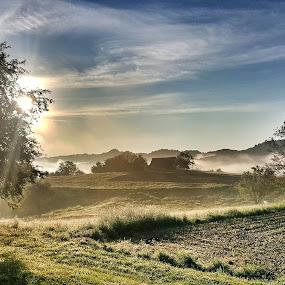 Sunrise in Haloze by Andreja Svenšek - Landscapes Prairies, Meadows & Fields ( diamonds, moment, haloze, morning, sun, field, magic, dawn, tree, nature, fog, magical, slovenia, trees, sunshine, sunrise, light,  )