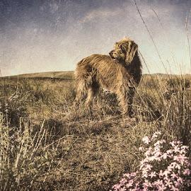 Gracie by Earl Heister - Digital Art Animals