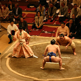 Sumo Wrestlers in Tokyo by Bryan Cole - Sports & Fitness Other Sports ( japan, japan asakusa, wrestlers, tokyo, sumo )