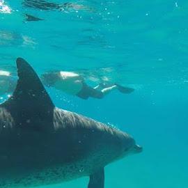 Nadar com golfinhos... paz... by Ana Maria De Figueiredo - Animals Sea Creatures