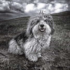 Poco Loco Perro by Heather Allen - Animals - Dogs Portraits