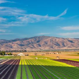 Lettuce Fields by Richard Duerksen - Landscapes Prairies, Meadows & Fields ( ca, lettucelkettuce fields, gonzales )