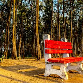 Long shadows .. and the golden hue by Hariharan Venkatakrishnan - City,  Street & Park  City Parks