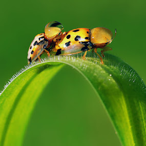 Berdua by Adhii Motorku - Animals Insects & Spiders