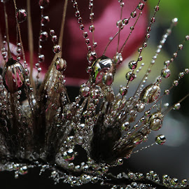 Cause I believe that destiny by Lala Fuad - Nature Up Close Natural Waterdrops