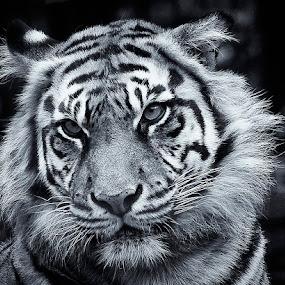 by Al Duke - Black & White Animals