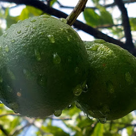 Oranges after the rain by Jeffrey Lee - Nature Up Close Gardens & Produce