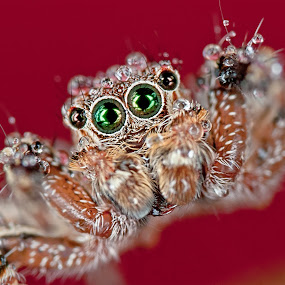 by Ak Pak Belang Sopan - Animals Insects & Spiders