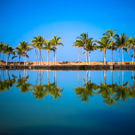 palm by George Petropoulos - Landscapes Beaches ( blue, beach, palmtree, hawaii )