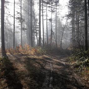 Гора by Georgi Kolev - Landscapes Forests ( гора., слънце., мъгла., храсти., път. )