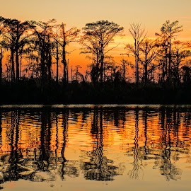 Cypress and a River by Wendy  Walters - Landscapes Waterscapes ( east pearl river, logtown, sunset, louisiana, reflections, cypress trees, mississippi )