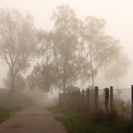 into the unknown by Janez Šturm - Nature Up Close Trees & Bushes ( fence, fog, trees, road, morning )