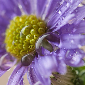 Flower by William Ducklow - Nature Up Close Flowers - 2011-2013