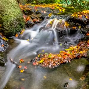 Orange Fall Stream 30 12 17.jpg