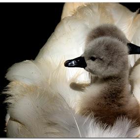 by Jon Harris - Animals Birds