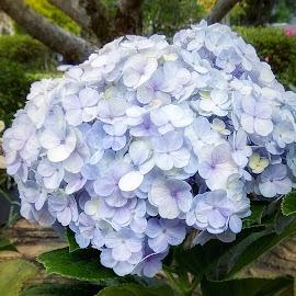 My Flower by Evan Septian - Flowers Flower Gardens ( #flower #visitindonesia #bogor )