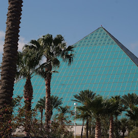 Moody Gardens by Brenda Shoemake - Buildings & Architecture Other Exteriors