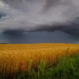 super cell by Lupu Radu - Instagram & Mobile Android ( sky, super cell, grass, dobrogea, green, grain, cell, cloud, romania, poppies, storm, rain )