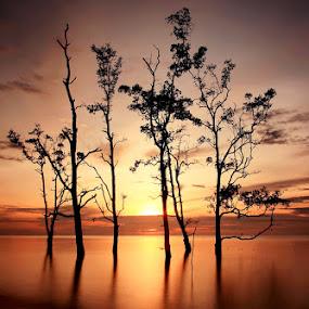 Golden Moment by Farid Wazdi - Landscapes Sunsets & Sunrises