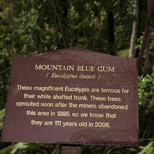 Plaque reads: 'Mountain Blue Gum (Eucalyptus deanei) These magnificent Eucalypts are famous for their white shafted trunk. These trees spouted soon after the miners abandoned this area in 1896, so we ...