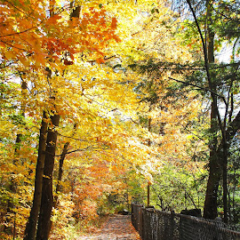 Old Mill Path by Rosemary Isabella - Nature Up Close Trees & Bushes (  )
