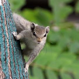 Hello  by DEBASHISH ROY - Animals Other Mammals