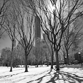 Central Park, New York in the snow in black and white by Dotan Naveh - City,  Street & Park  City Parks ( b&w, black and white, architecture, travel, storm, spring, usa, sun, city, tranquil, nature, cold, sunny, snow, weather, central, black, building, park, vintage, white, manhattan, central park, urban, winter, blue, outdoors, trees, scenery, central. new york )