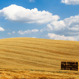 Val D Orcia by Pietro Ebner - Landscapes Prairies, Meadows & Fields ( field, orcia, val, tuscany, toscana, yellow )