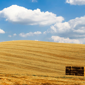 Val D Orcia by Pietro Ebner - Landscapes Prairies, Meadows & Fields ( field, orcia, val, tuscany, toscana, yellow,  )