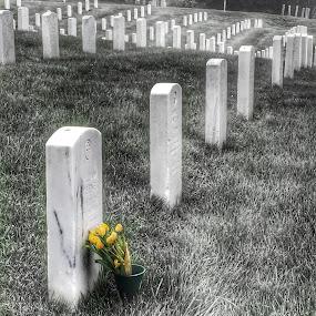 Arlington Cemetery by Briana Jones - City,  Street & Park  Cemeteries ( washington, cemetery )