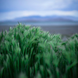 Grass in the wind by Jason Murray - Nature Up Close Leaves & Grasses ( utah, close up, green, nature, grass, hills, nature up close, landscape, blurred, wind, windy )