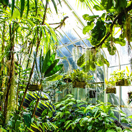W W Seymour Botanical Gardens by Shari Linger - City,  Street & Park  City Parks ( city parks, bavarian landscape, flower gardens, tacoma, botanical gardens )