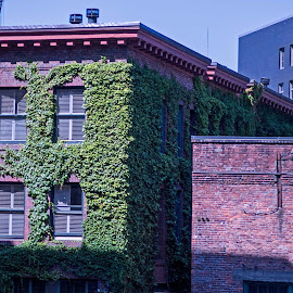 Ivy covered by Will McNamee - Buildings & Architecture Office Buildings & Hotels ( patty_j_ball@hotmail.com; donaldbarber11@msn.com; donaldbarber11@msn.com; d3a1@aol.com;  postholes2002@yahoo.com; )