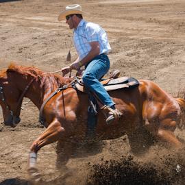 by Pierre Théberge - Sports & Fitness Rodeo/Bull Riding ( barils, gymkana, chevaux, villes, ste-brigide-d'iberville qc, compétitions équestre, lieux, evénements-events )
