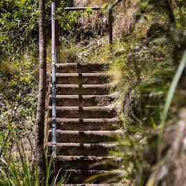 10102016_3785 by Deborah Bisley - Nature Up Close Rock & Stone ( park, path, stone, bush, forest, steps )