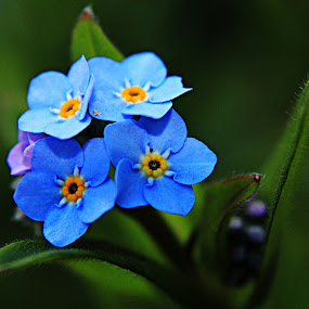Blue Felt by Kelly Williams - Nature Up Close Flowers - 2011-2013 ( macro, felt, blue, grass, flowers, pretty, weed.garden )
